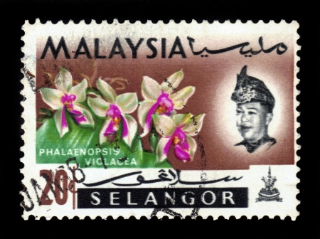 MALAYSIA - CIRCA 1964  a stamp printed in Selangor, Malaysia shows Phalaenopsis Violacea, orchid endemic flower, circa 1964 Stock Photo - 19391251