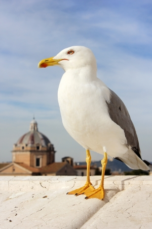image of seagull on the background of dome of the cathedral in Rome. Italy. Stock Photo - 19403854