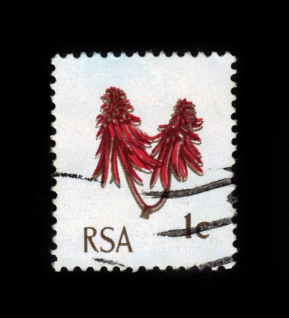 erythrina: SOUTH AFRICA - CIRCA 1969: A stamp printed in South Africa shows  Coral Tree Flower (Erythrina lysistemon), circa 1969 Editorial