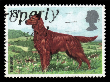 GREAT BRITAIN - CIRCA 1978  A stamp printed in the Great Britain shows Irish Setter, series, circa 1978 photo