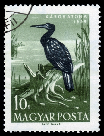 Hungary-CIRCA 1959  A stamp printed in the Hungary, shows the Great Cormorant  Phalacrocorax carbo , known as the Great Black Cormorant, circa 1959 Editorial