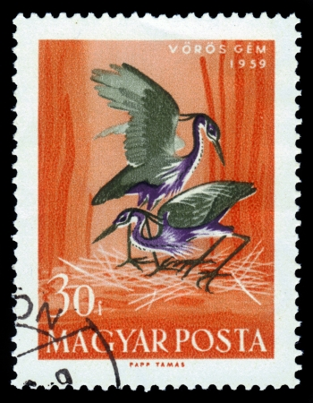 Hungary-CIRCA 1959  A stamp printed in the Hungary, shows the Purple Heron  Ardea purpurea , circa 1959