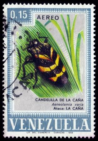 VENEZUELA - CIRCA 1968  a stamp printed in the Venezuela shows insect pest in Venezuela, aeneolamia vagia, candelilla of cane, circa 1968