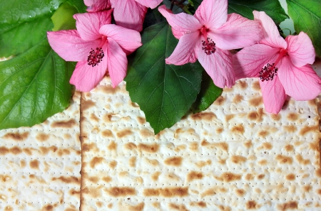 Pink hibiscus flower with biscuit background