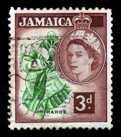 JAMAICA - CIRCA 1956  A stamp printed in Jamaica shows mahoe - hibiscus elatus , talipariti elatum, national tree of Jamaica, circa 1956