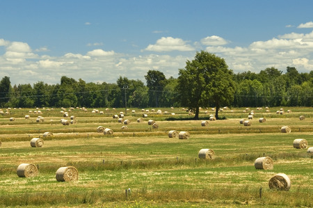 rural landscape with bales of hay on the mown field Stock Photo
