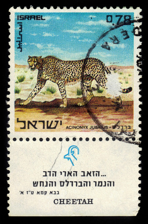 Israel - CIRCA 1971  A stamp printed in Israel, shows a cheetah, from the series  nature reserves , circa 1971 photo