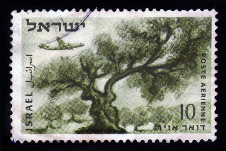 judah: ISRAEL - CIRCA 1954  a airmail stamp printed in Israel, shows plane over olive tree in the mountains of Judah, circa 1954