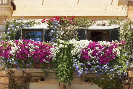 balcony twined with flowers of petunias on facade of the house on the Piazza Navona, Rome, Italy