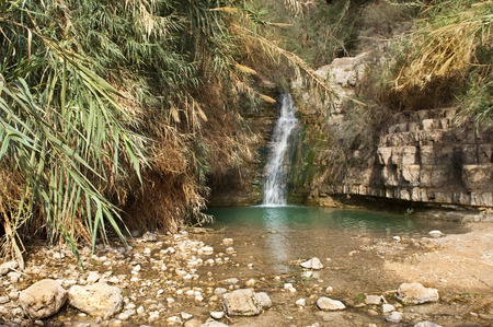 creek with mineral water, Ein Gedi Nature Reserve, near Dead Sea, Israel photo