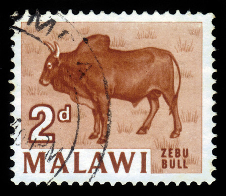 Malawi  - CIRCA 1964: a souvenir sheet printed in Malawi , shows Zebu Bull, circa 1964