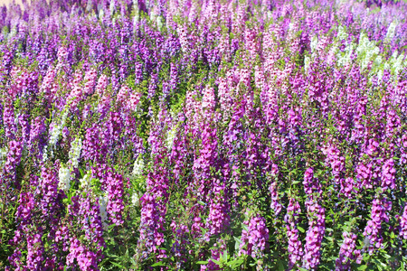 flores moradas: mar de flores como fondo floral Foto de archivo