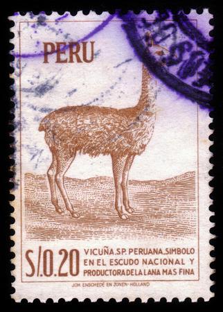camel post: PERU - CIRCA 1966:A stamp printed in Peru shows a llama, circa 1966 Editorial