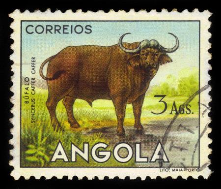 ANGOLA - CIRCA 1953: A stamp printed in Angola shows a african buffalo, \\\\\\\angolan fauna\\\\\\\ issue, circa 1953