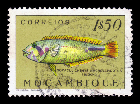 wrasse: MOZAMBIQUE - CIRCA 1951: A stamp printed in Mozambique shows sea grass wrasse (novaculichthys macrolepidotus), series fishes, circa 1951