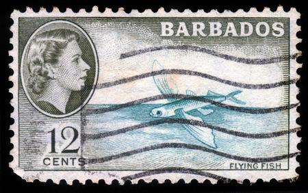 queen elizabeth ii: BARBADOS - CIRCA 1954: A stamp printed in Barbados shows flying fish and portrait of Queen Elizabeth II, circa 1954