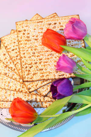 piety: jewish holiday of Passover and its attributes, with matzo and spring tulips - Happy Passover