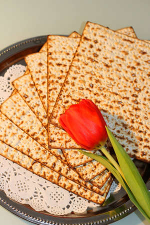 matzo: jewish holiday of Passover and its attributes, with matzo and spring tulips - Happy Passover