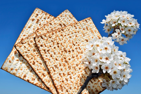 matzos: jewish holiday of Passover, branch of a blossoming tree and matzo on the background of bright blue sky Stock Photo