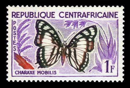 noble: butterfly Noble White Charaxes