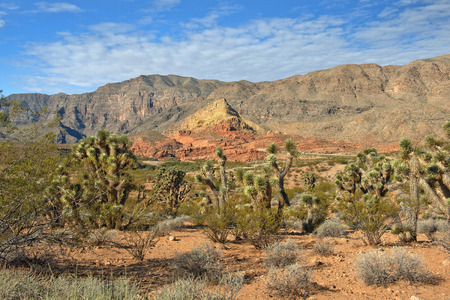 landscape near the Grand Canyon, Grand Canyon National Park, Arizona, United States Stock Photo