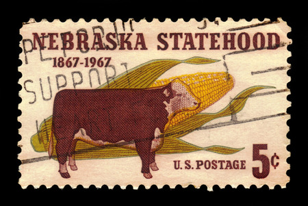hereford: USA - CIRCA 1967: a stamp printed in the USA, shows hereford cattle and ear of corn, Nebraska Statehood, 100th Anniversary Issue, circa 1967