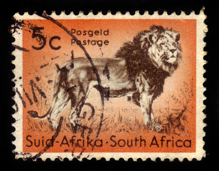 standing lion: SOUTH AFRICA - CIRCA 1958: A stamp printed in South Africa shows king of beasts, standing lion, circa 1958