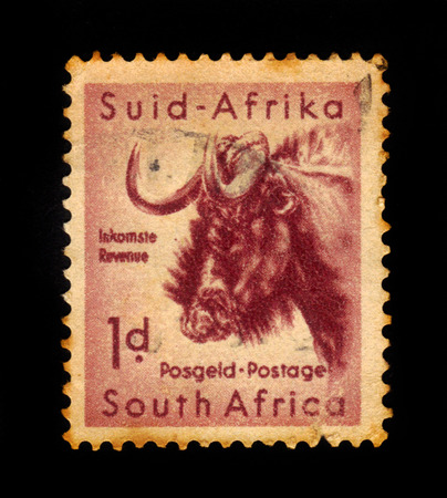 kruger park: SOUTH AFRICA - CIRCA 1954: A stamp printed in South Africa shows wildebeest, south african wildlife, Kruger park series, circa 1954