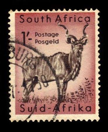 kruger park: South Africa - CIRCA 1954: a stamp printed in the South Africa shows greater kudu (tragelaphus strepsiceros), series south african wildlife, Kruger Park, circa 1954