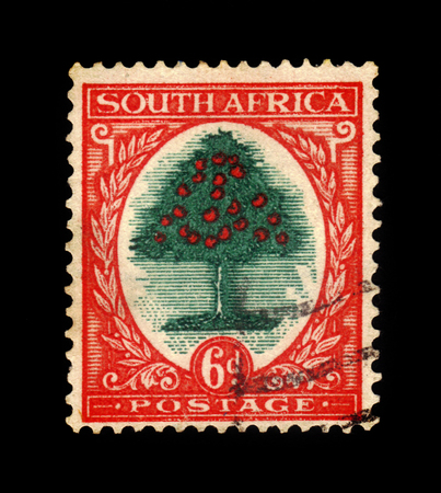 poststempel: Südafrika - CIRCA 1926: ein in der Südafrika gedruckte Briefmarke zeigt Orangenbaum (Citrus sinensis - Rutaceae), Serie definitives, circa 1926