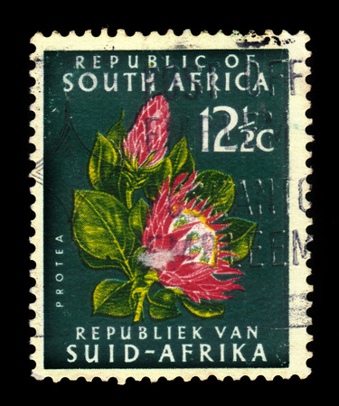 protea flower: South Africa - CIRCA 1961: a stamp printed in the South Africa shows Protea Flower, national symbol of South Africa, circa 1961 Editorial