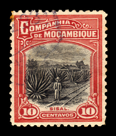 sisal: Company of Mozambique ( Portuguese Mozambique )- CIRCA 1925: A stamp printed in Portugal shows sisal plantation, circa 1925