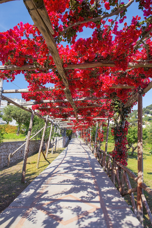 picturesque path, covered with red bougainvillea, Capri, Gulf of Naples, Campania, Italy Stock Photo