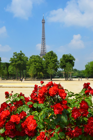 view of the Eiffel Tower from the Champ de Mars through blooming red roses, Paris, France Stock Photo