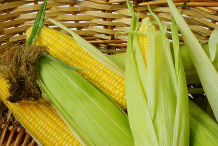 Fresh corn cobs in a basket closeup photo