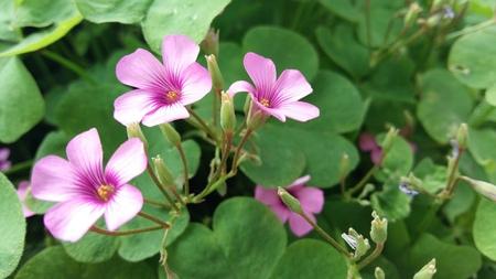 in twos: Flower