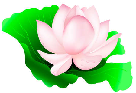 flower  lotus on the leaf Stock Vector - 13012051