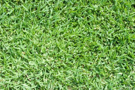 Real green grass - perfect as a texture or as a background