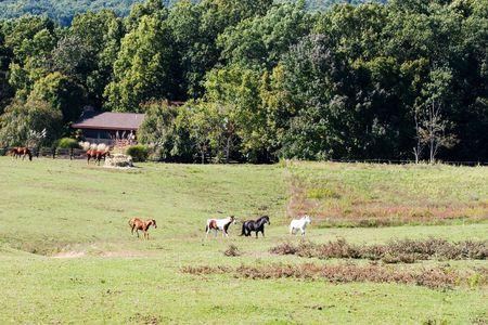 Horse farm, Virginia, Shenandoah River Valley