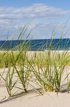 Grass, sand, ocean, sun. NJ shore.