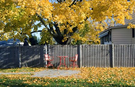 Red coffee table and red chairs on the residential back yard under the maple tree covered with golden autumn leaves   Stock Photo