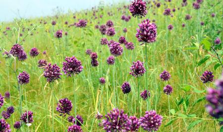 meadow flowers 스톡 콘텐츠