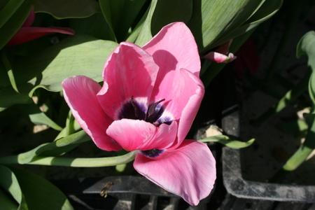 Flower background. Stock fotó