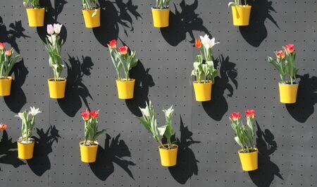 flowers in pots Banco de Imagens