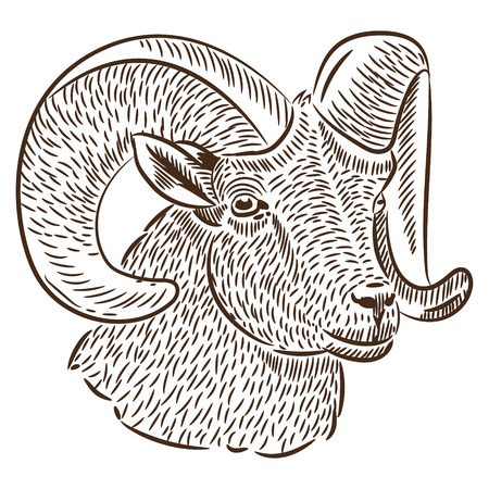 Sketch by hand. Portrait of a sheep, vector