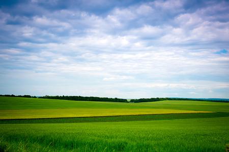 peaceful background: Green grassland and blue sky in summer. Classic Ukrainian landscape
