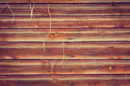 outwards: Old wood texture background with plant growing outwards