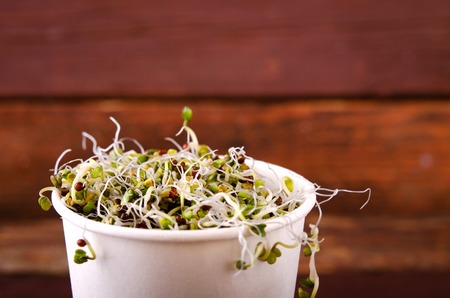 paper cup: Microgreens assortment in paper cup. Healthy Green Salad with fresh raw sprouts.