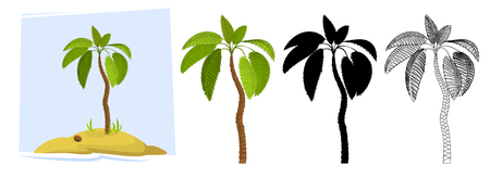 Tropical palm trees. Illustration of a palm tree Illustration