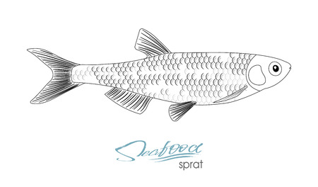 Sprat sketch vector fish icon. Isolated marine atlantic ocean sprats. Linear silhouette sea fish.